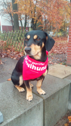 Unser neuer Schulhund
